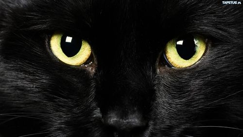 grafika cat, eyes, and black