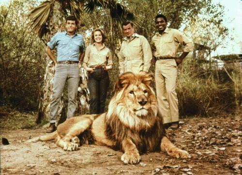 Daktari. Who didn't like Clarence the Cross-Eyed Lion?