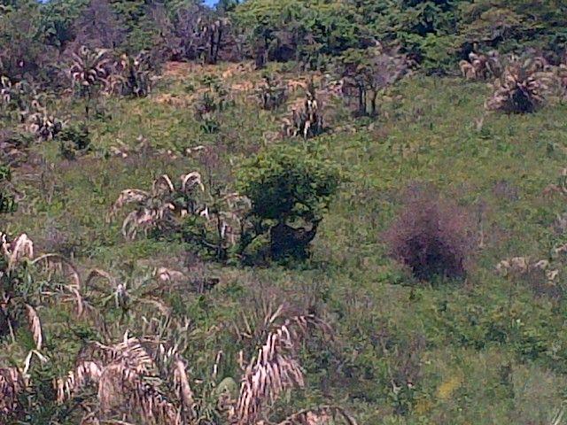 Cape Vidal - St. Lucia - Nature
