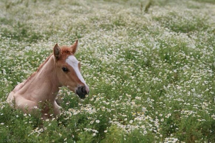 59 best images about Horse in a field of Flowers on ...
