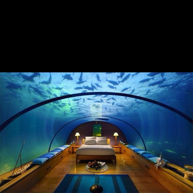 Waterbed my dream room my dream room pinterest for Waterbed with fish