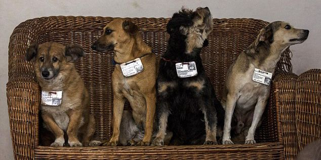 Cuban Program to Pair Stray Dogs With State Institutions