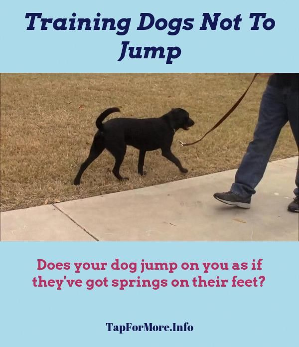 Stop Dog Jumping And How To Potty Train A Puppy Go Outside Check The Pic For Lots Of Dog Tr Dog Training Obedience Easiest Dogs To Train Dog Clicker Training