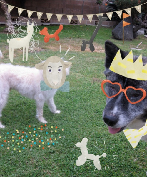Nico + Buster = Party Time: Party Time, Party Dogs, Lil Guys, Fury Lil, Pumpkin Pies