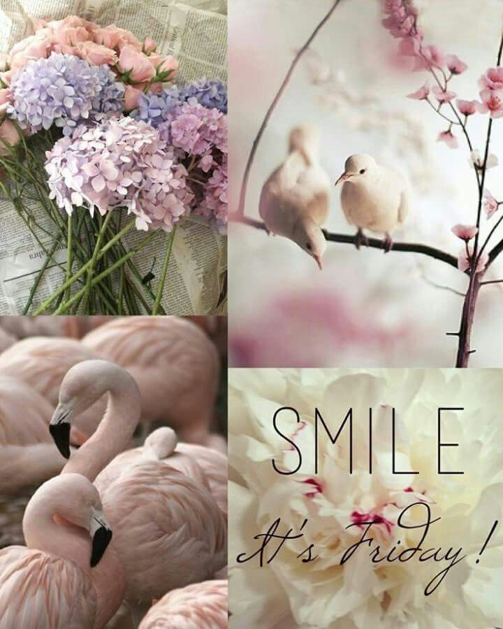 Pink,flowers,flamingos,birds...PEACE of senses
