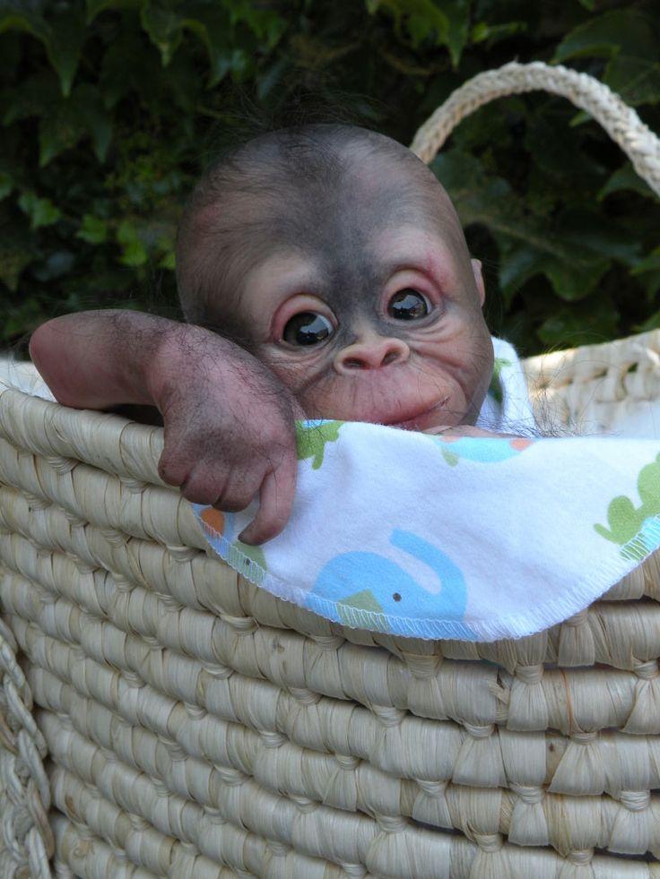 Bindi, reborn baby gorilla | Reborns | Reborn doll kits ...
