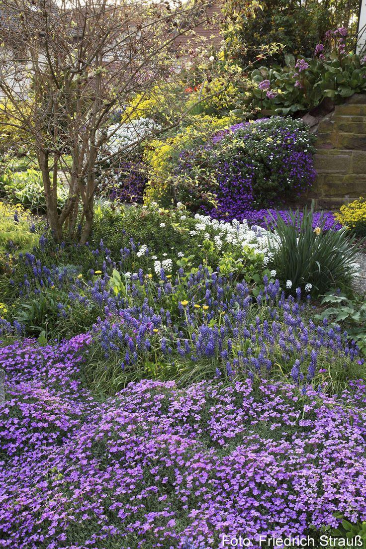 Große Beet in einem Fruehlingsgarten, in dem großflaechig Gänsekresse und anderer Stauden und Zwiebelblumen bluehen.