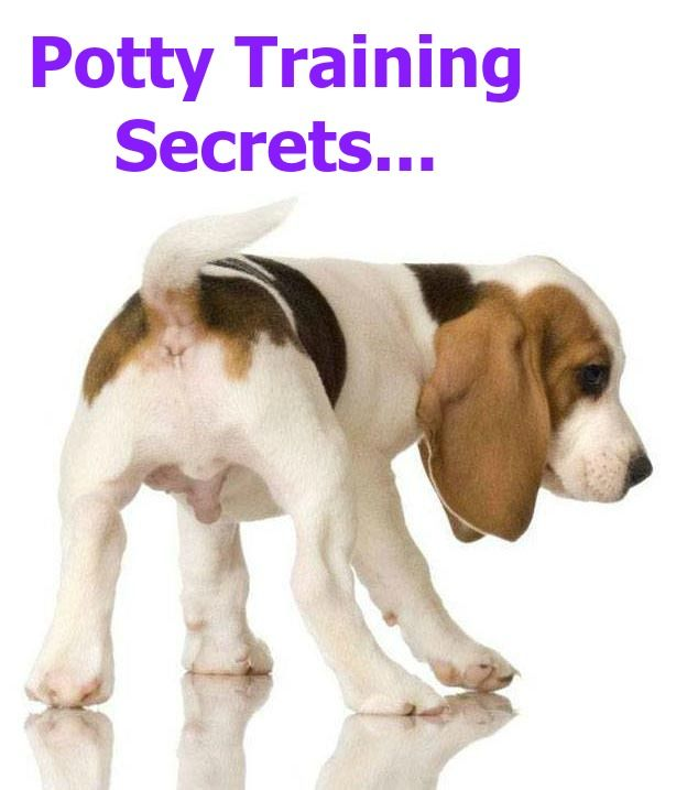 108 best pixie prep images on pinterest pets dog cat for Dog potty training problems