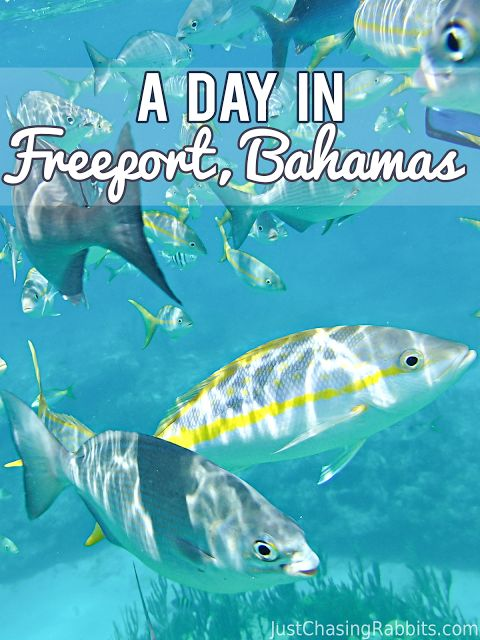 A Day in Freeport, Bahamas