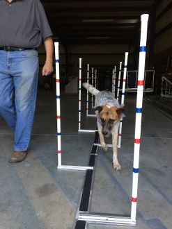 New Channel Weave Poles - The poles can be adjusted up to 10 inches from the centerline creating a channel for the dog to run in up to 20 inches wide.  The poles lock in place with a simple turn of the wrist, no tools required.  Our channel weave pole bases also come with anti-slip tape. Price $245.00  http://shop.emmcosport.com/Channel-Weaves-CW001.htm