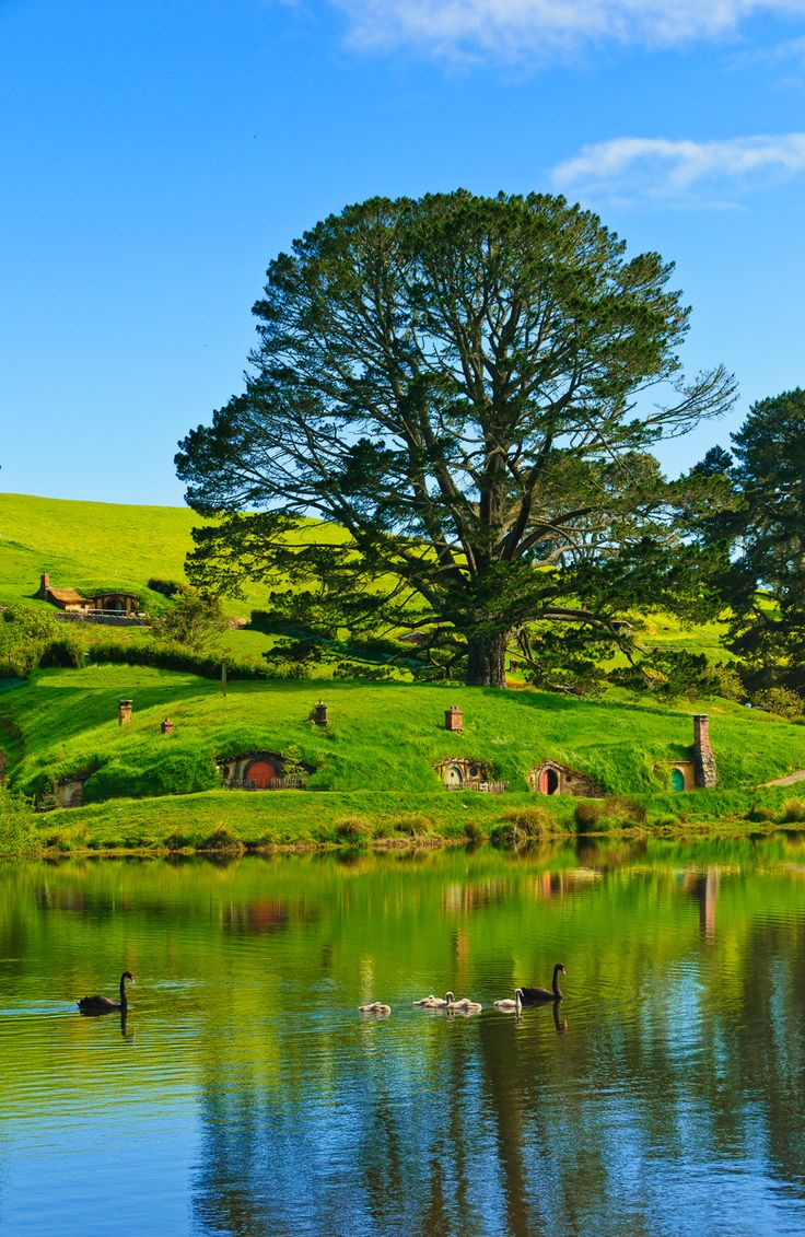 Waikato Countryside, Also Known As Hobbiton, North Island, New Zealand