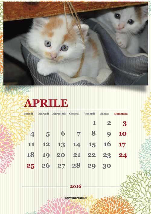 e per gli amanti dei gatti questo simpatico calendario 2016...