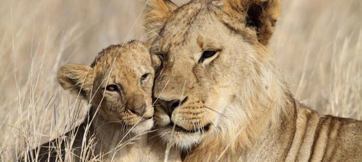 Two Week Safari In Kenya & Tanzania with flights, Explore