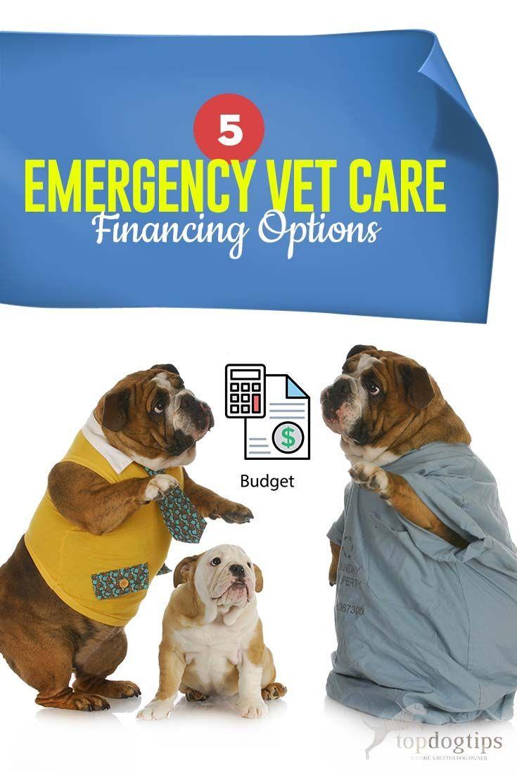 5 Emergency Vet Care Financing Options Emergency Vet Vets Puppy Health
