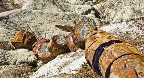 Petrified Forest National Park, Navajo and Apache counties, ArizonaPhotos, Places Ives, Favorite Places, National Parks Usa, Forests National, Places I D, Petrified Forests