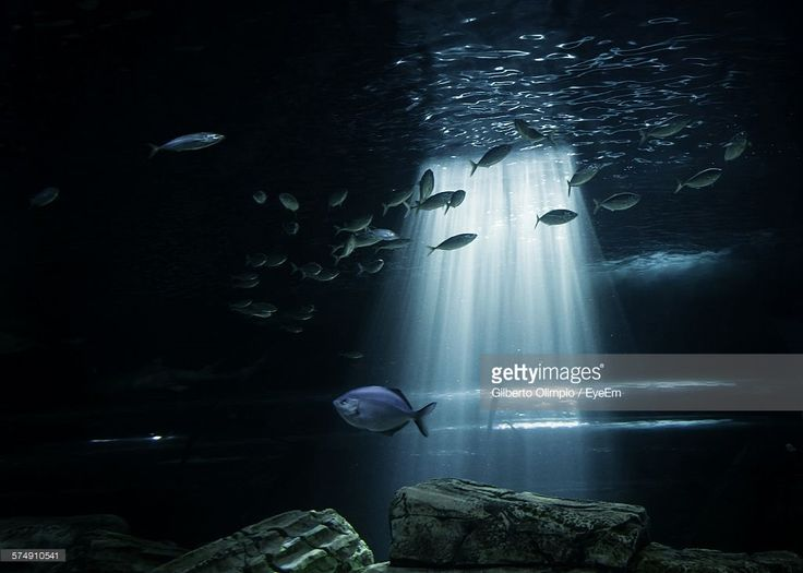 Stock-Foto : Low Angle View Of Sunbeam Streaming Through Water In Aquarium