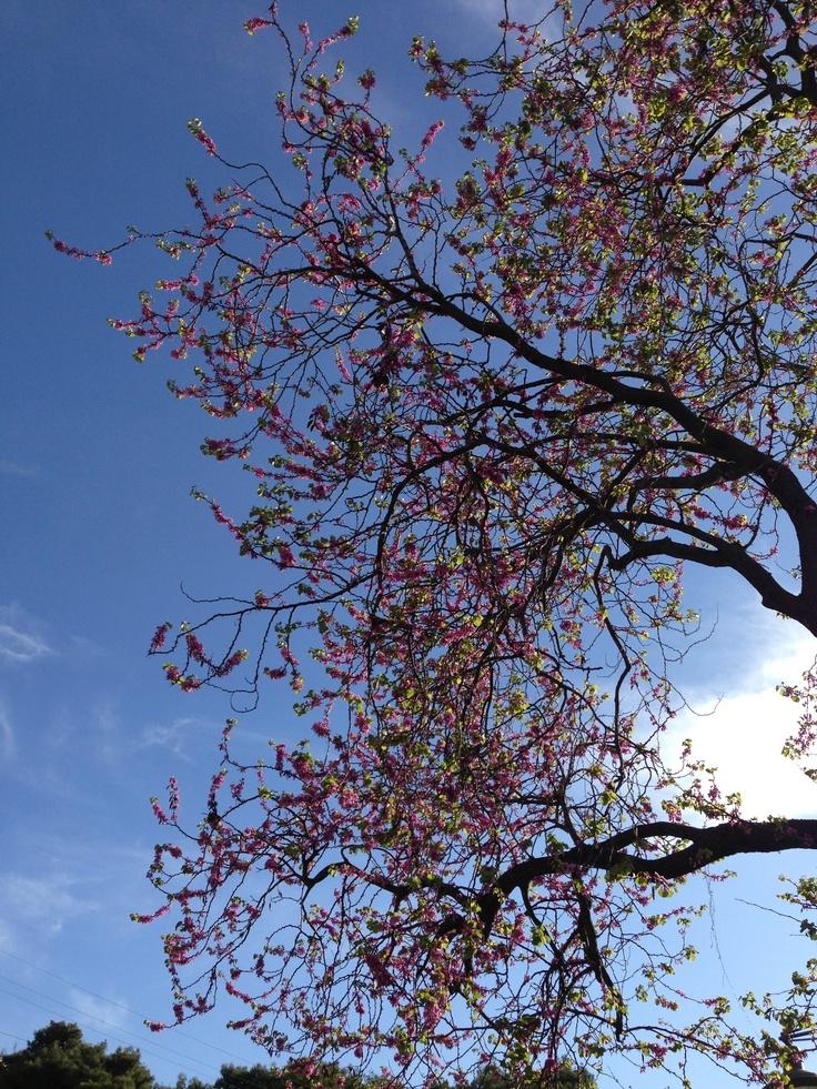 #nature #tree #Greece