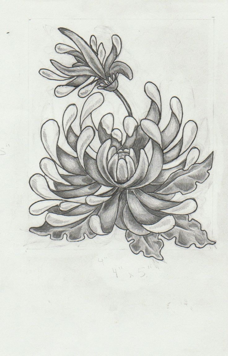 Chrysanthemum Tattoo Design by mashamanya.deviantart.com on @deviantART