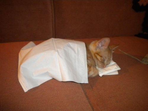 Use Kleenes... :)Sleepy Kitty, Funny Cat, Night Night, Sweets Dreams, Cat Naps, Sleep Tights, Naps Time, Nighties Night, Animal