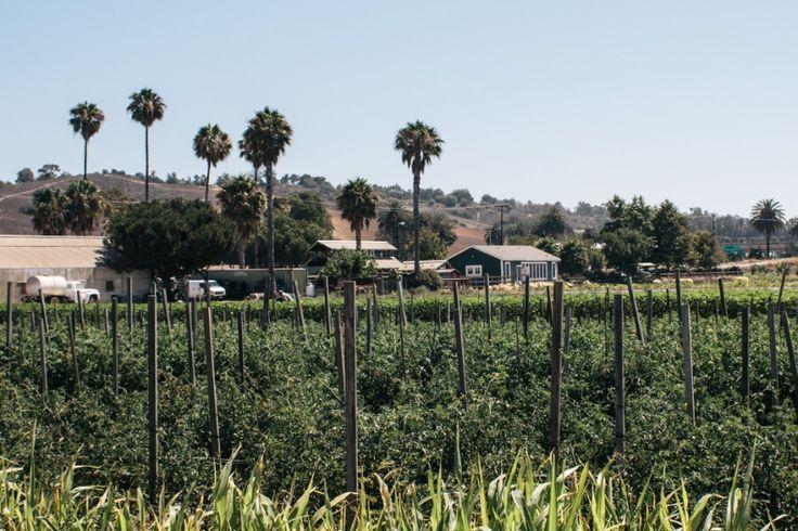 California Travel Guide  |  Gather & Feast