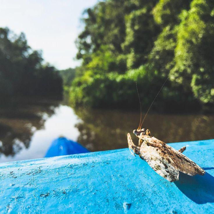 A new friend I made in the Borneo jungle. His name is Fredd.