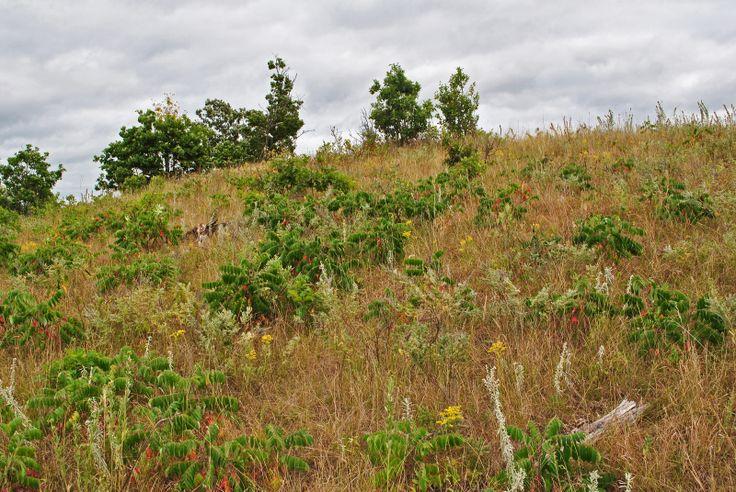 Sterling Barrens, Polk Co. Nature, Outdoor, Wisconsin