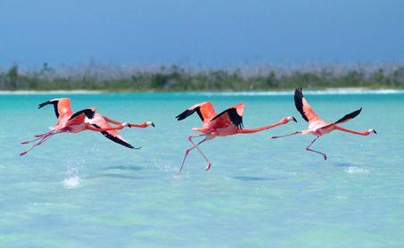San Felipe Yucatan para vacacionar esta semana santa