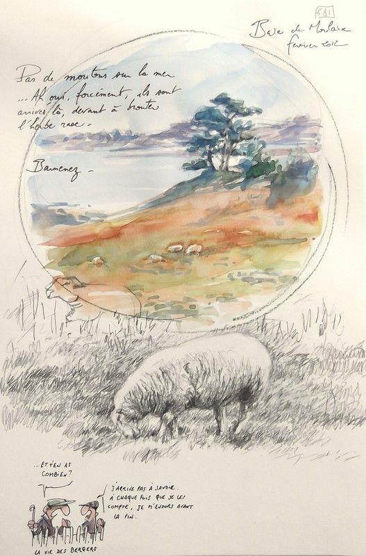 Baie de Morlaix - Fév 2012 - TOME 6, sheep, landscape, field notes