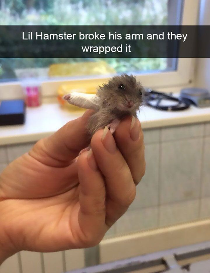 Funny Animal Pictures To Make You Laugh Out Loud - 19
