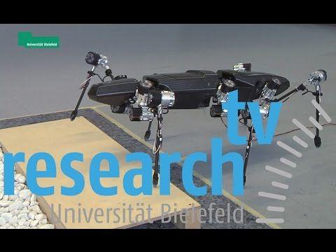 Hector - Eine Roboter-Stabheuschrecke lernt laufen - research_tv der Universität Bielefeld - YouTube