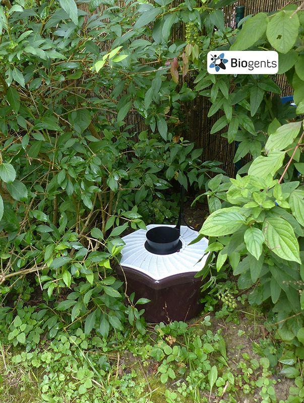 Eine Falle gegen Mücken: Die umweltfreundliche Mückenfalle von Biogents, die BG-Mosquitaire mit CO2, reduziert bei richtiger Platzierung die Mückenpopulation im Garten. Die Technologie dazu wurde in 16 Jahren Forschung an der Universität Regensburg entwickelt. Beispiel für eine gute Platzierung im Garten: schattig, feucht und windgeschützt.