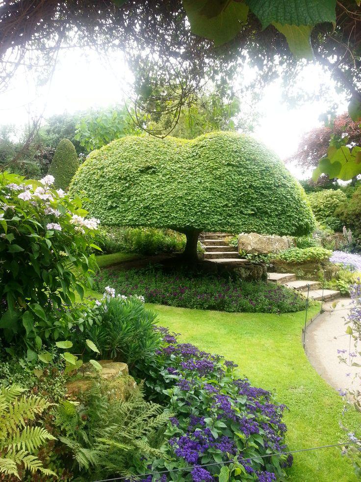 Magical tree hever castle gardens kent england for Garden trees kent