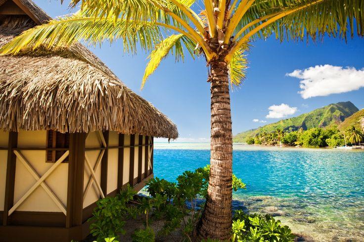 Trópico Mar Palmeira Bangaló Naturaleza