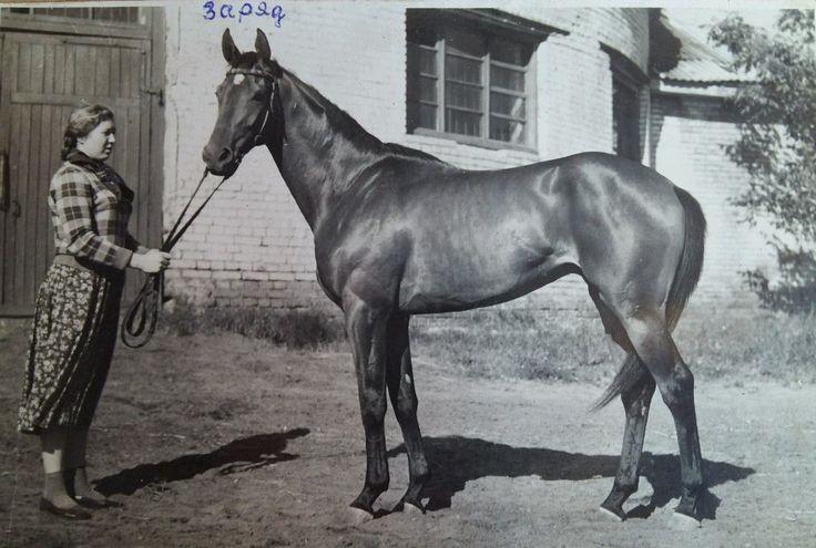 Заряд (Агрегат - Зеркальная), 1955 г. р.
