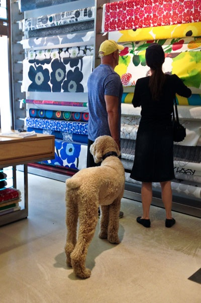 Danika and I visiting Marimekko with Chablis in tow.. (they know me)