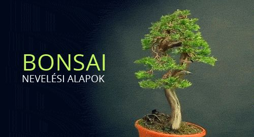 - Video - Öreg fa mini kiadásban: a bonsai