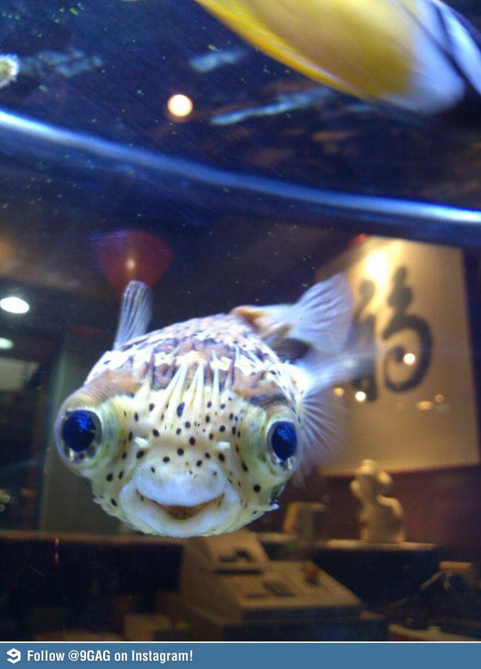 смешная картинка рыба в аквариуме конце