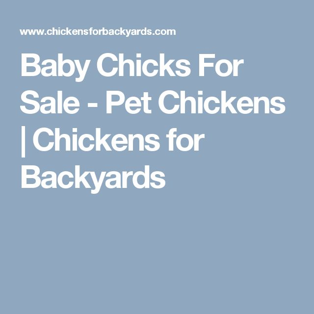 Baby Chicks For Sale - Pet Chickens | Chickens for Backyards