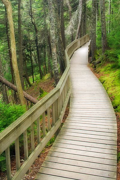 Point Wolfe Boardwalk - Fundy National Park - New Brunswick, Canada