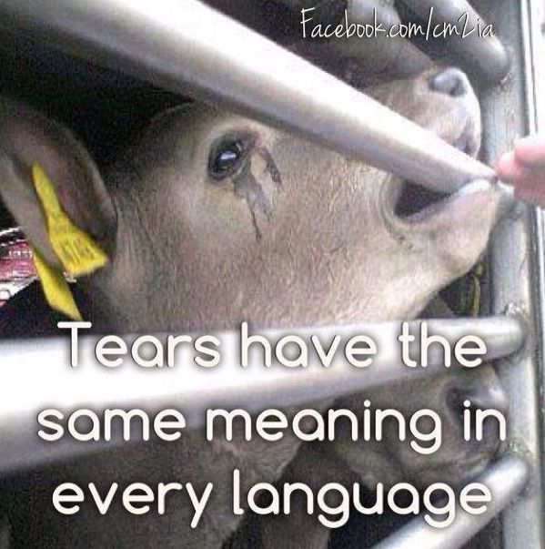 Please WAKE UP and THINK FOR YOURSELF instead of allowing the meat and dairy industry propaganda to decide for you!