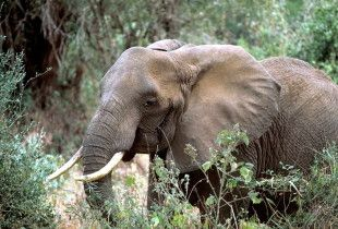 Target: Craig Henderson, Head of Programming for BBC English Regions  Goal: Discontinue selling ivory on the BBC network.  Even after ivory bans all over the world, the British Broadcasting Corporation (BBC) is still promoting ivory.