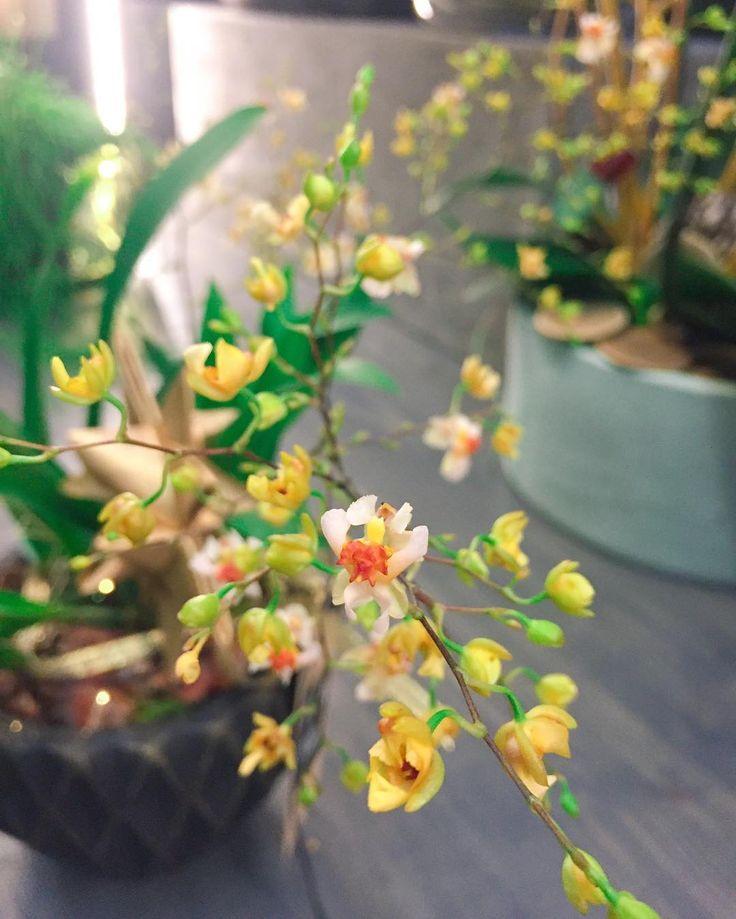 Fleuriot Fleurs (@fleuriot_fleurs) • Photos et vidéos Instagram