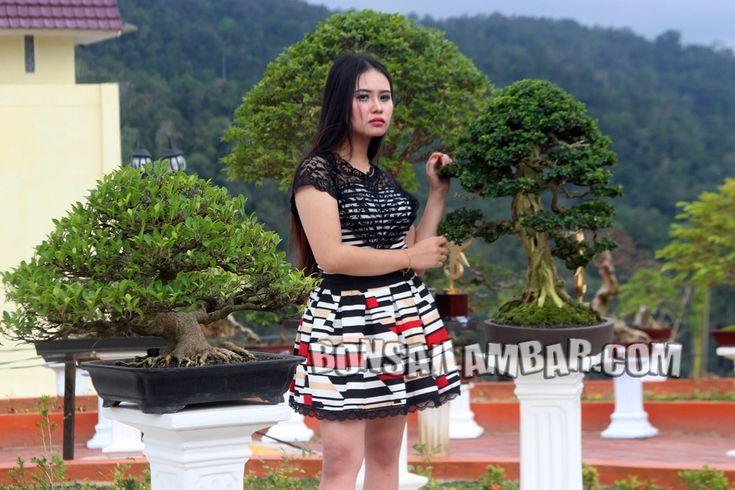 Kejarfakta.com, Lambar - Setiap tanaman Bonsai memiliki wajah yang berbeda sesuai dengan cara membentuknya. Melalui bonsai yang dirawat di d...