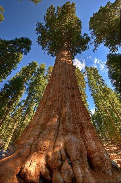 sequoia national park single asian girls Download 6,969 sequoia stock photos this image of a sequoia forest was captured in the sequoia national park vertical composition of single giant sequoia.