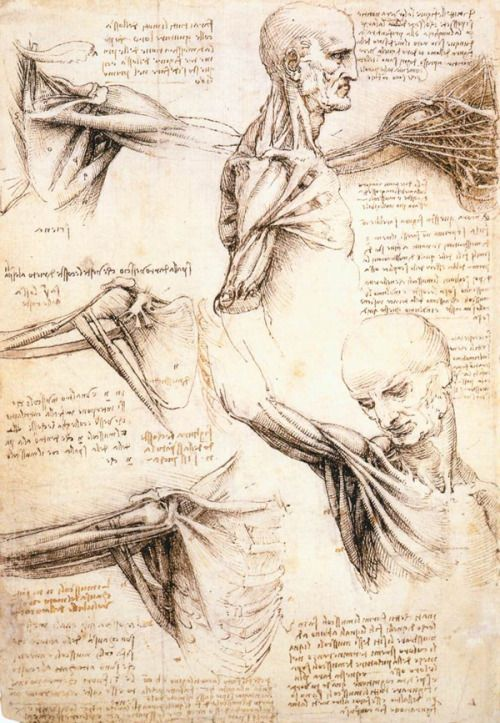Leonardo Da Vinci's anatomical sketches of the shoulder and arm. In the early 1500s, Da Vinci participated in at least 30 cadaver dissections and made several notebooks of sketches. His plan was apparently to publish a comprehensive anatomy textbook, but he never finished it, and Andreas Vesalius' book, published in 1543, served as the standard anatomical text of the time.