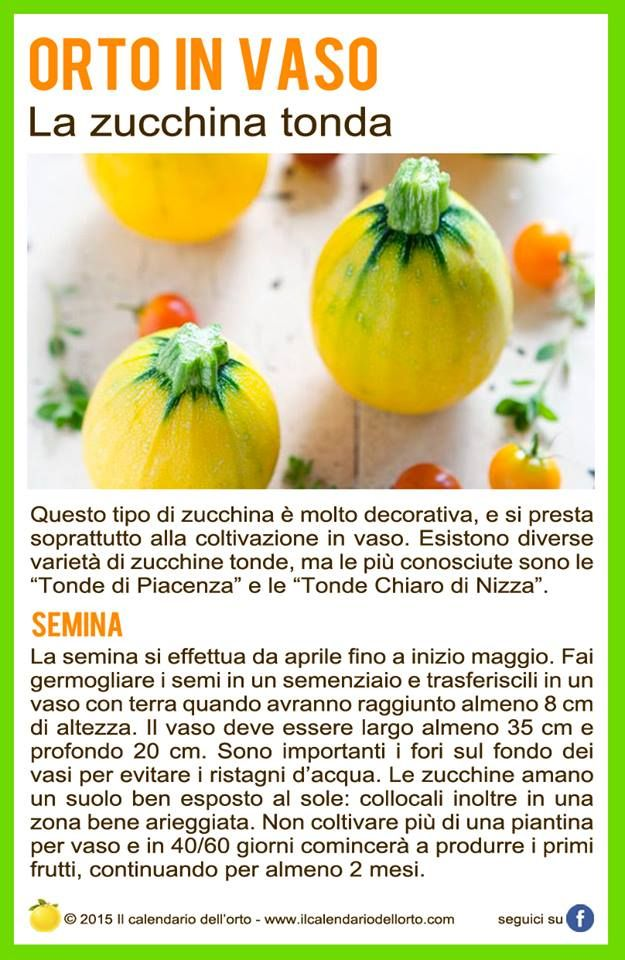 La zucchina tonda