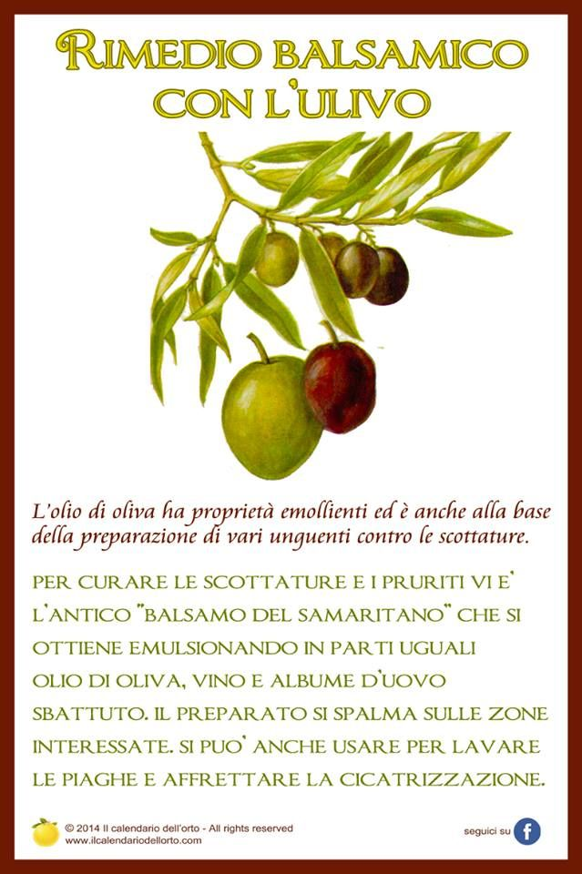 rimedio balsamico con l'ulivo