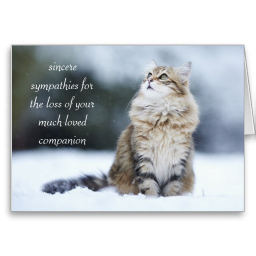 Sympathy Dog Quotes: Sympathy Card For The Loss Of A Cat