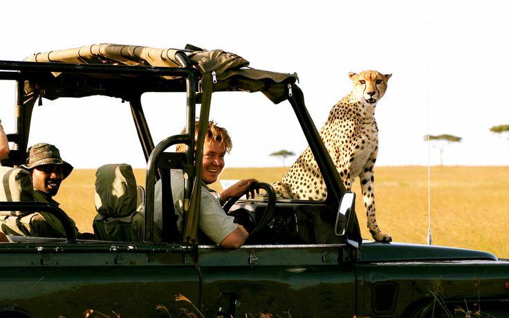 Denne eventyrlig safari kombinerer højdepunkterne i både Kenya og Tanzania. I koncentrerer jer hovedsagligt om de internationalt anerkendte national parker, kendt fra Discovery Channel. I besøger også mindre kendte områder og kan nyde at interagere med de lokale stammer, herunder de berømte Masaier.