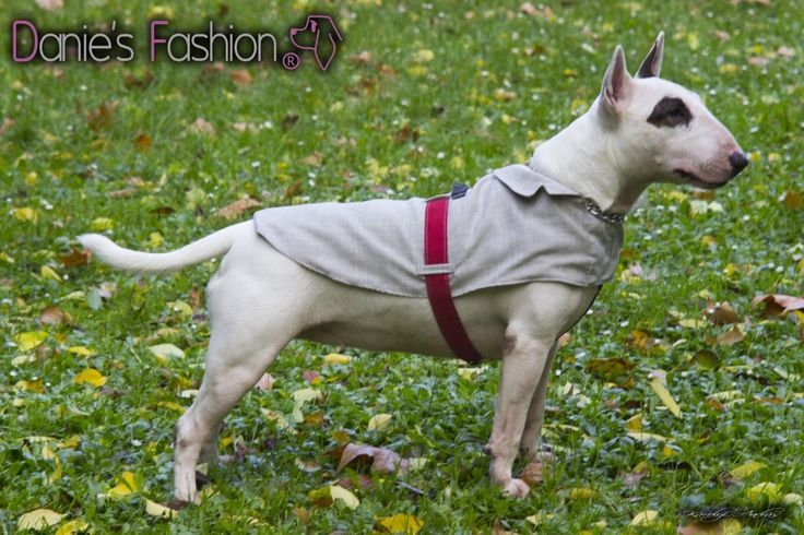 Dog coat http://daniesfashion.com/